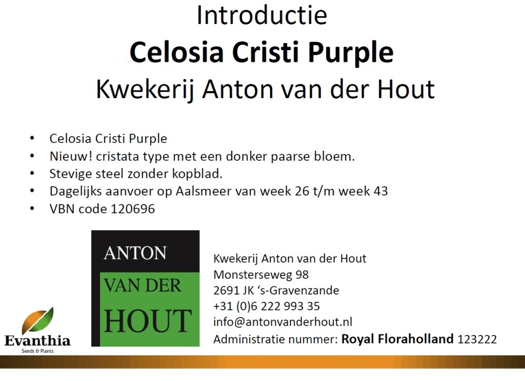 introductie-cristi-purple